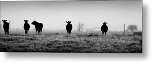 Kentucky Cows Metal Print by Todd Fox