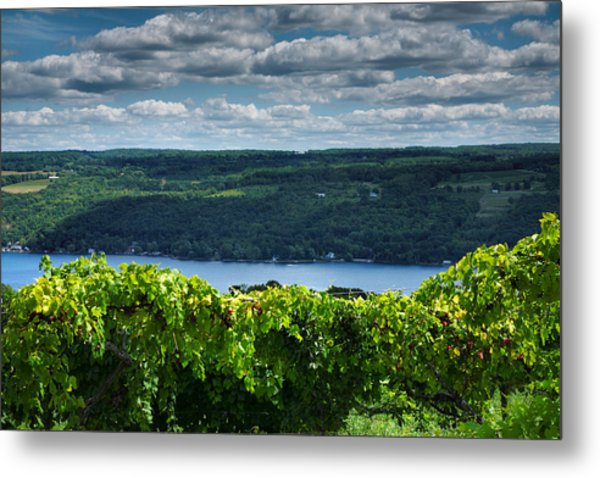 Keuka Vineyard I Metal Print