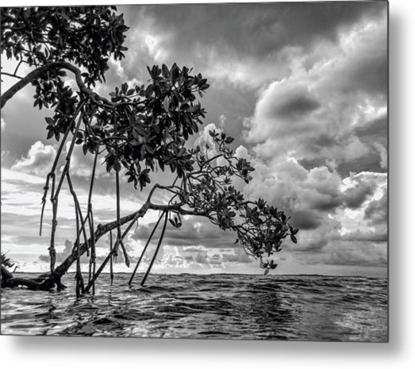 Key Largo Mangroves Metal Print