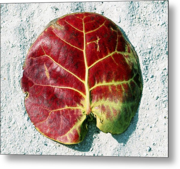 Key West Leaf In The Sand Metal Print