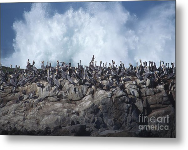 Kinda Crowded Metal Print by Stan and Anne Foster