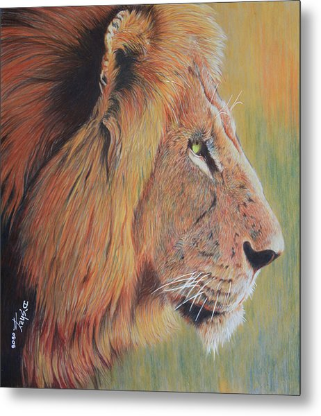 King Of The Jungle Metal Print by Don MacCarthy