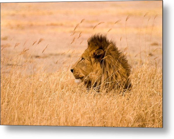 King Of The Pride Metal Print