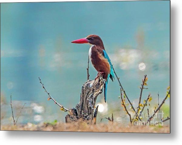 Kingfisher On A Stump Metal Print