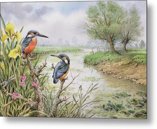 Kingfishers On The Riverbank Metal Print