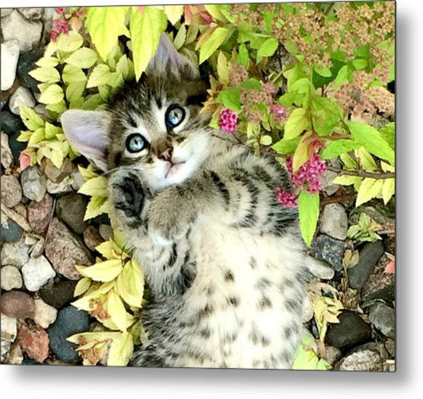 Kitten Dreams Metal Print