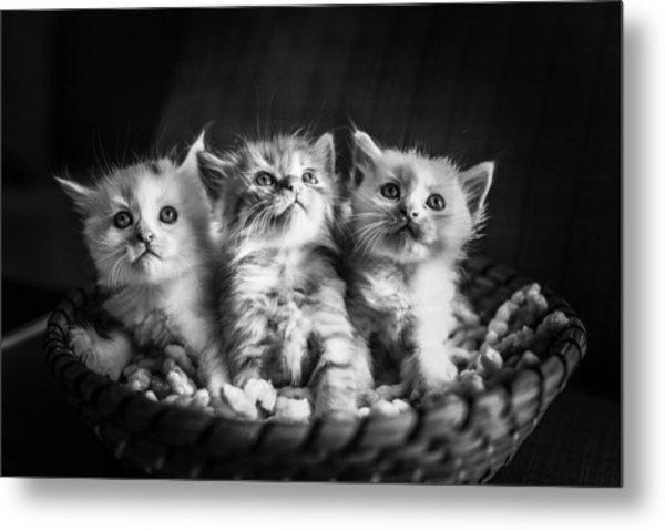 Kitten Trio Metal Print