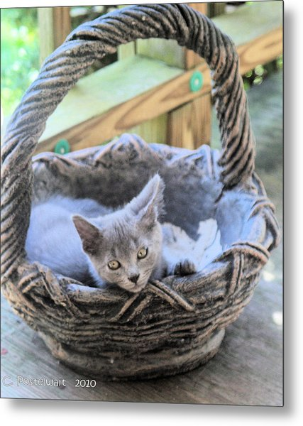 Kitten In A Basket Metal Print