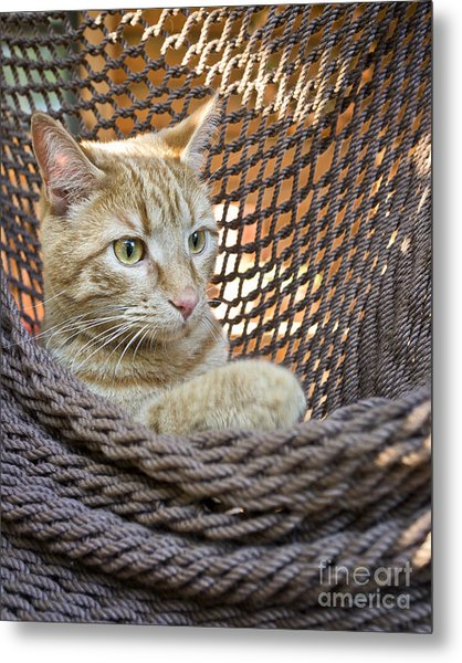 Kitten In A  Hammock Metal Print