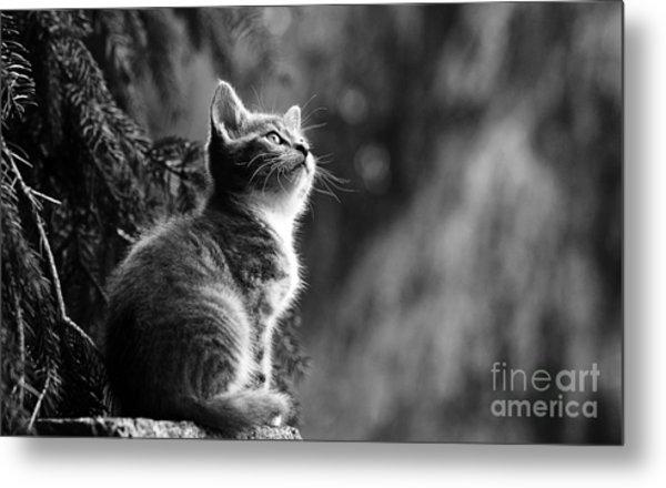 Kitten In The Tree Metal Print