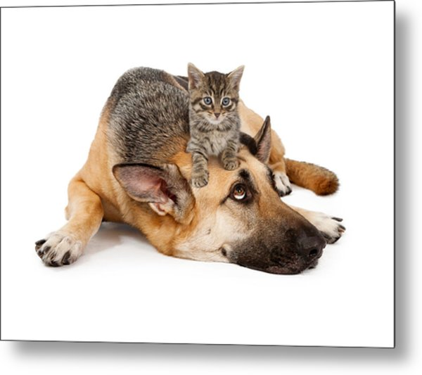 Kitten Laying On German Shepherd Metal Print