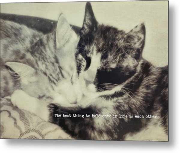 Kitten Nap Quote Metal Print by JAMART Photography