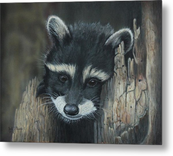 Kit...the Baby Raccoon Metal Print