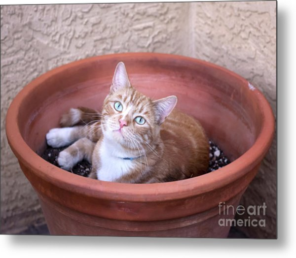 Kitty Bulbs Metal Print
