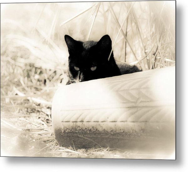 Kitty Stalks In Sepia Metal Print