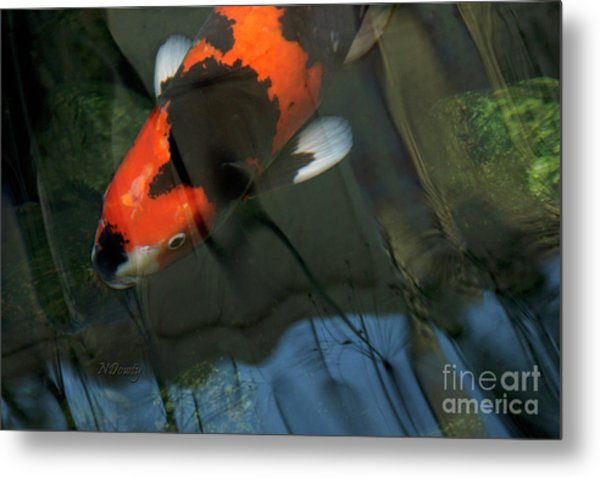 Koi Reflection Metal Print