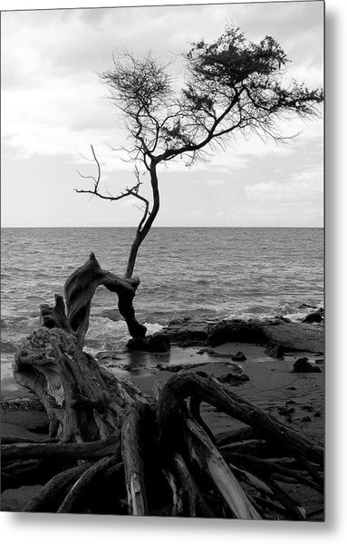 Kona Coast Tree Metal Print