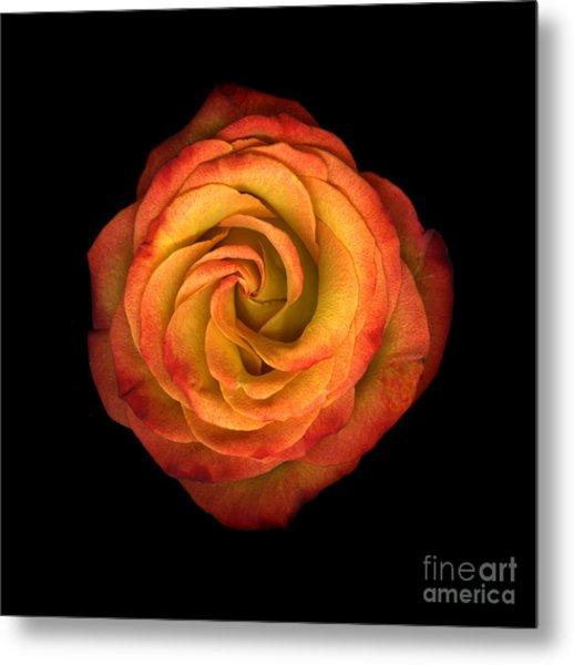La Vie En Rose Metal Print