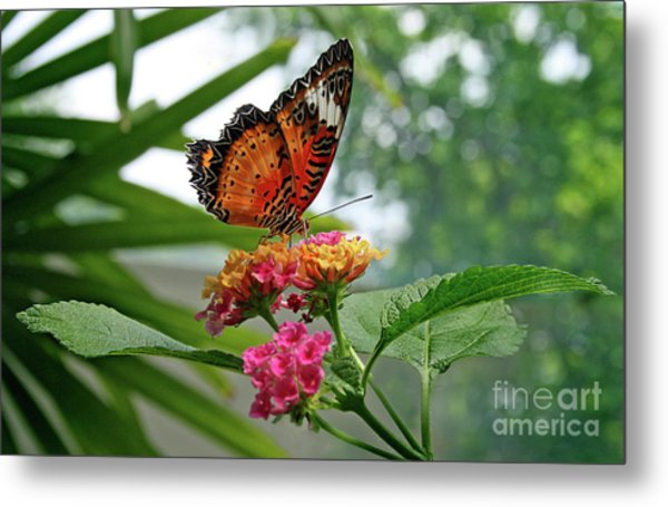 Lacewing Butterfly Metal Print