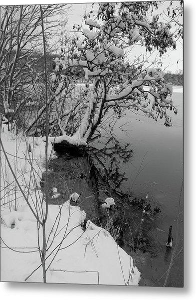 Laden With Winter Metal Print