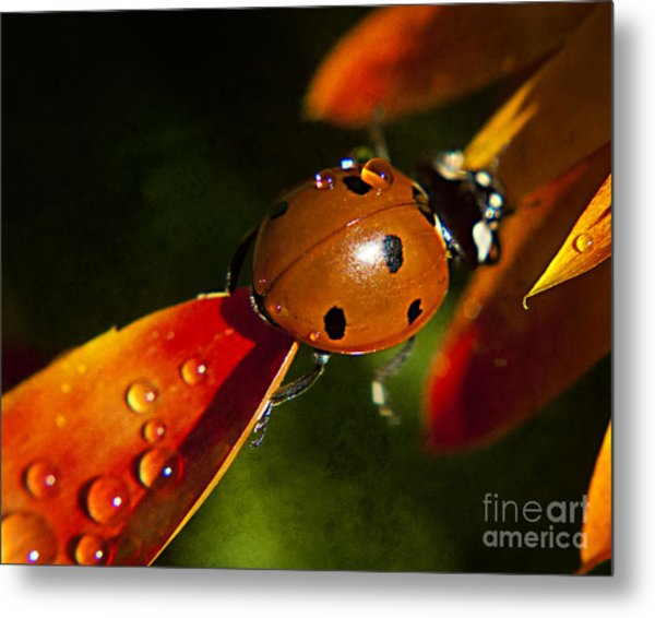 Lady Bug Bridge Metal Print