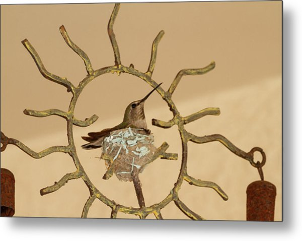 Lady Hummingbird On Her Nest Metal Print