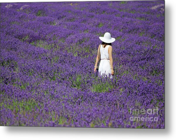 Lady In Lavender Field Metal Print