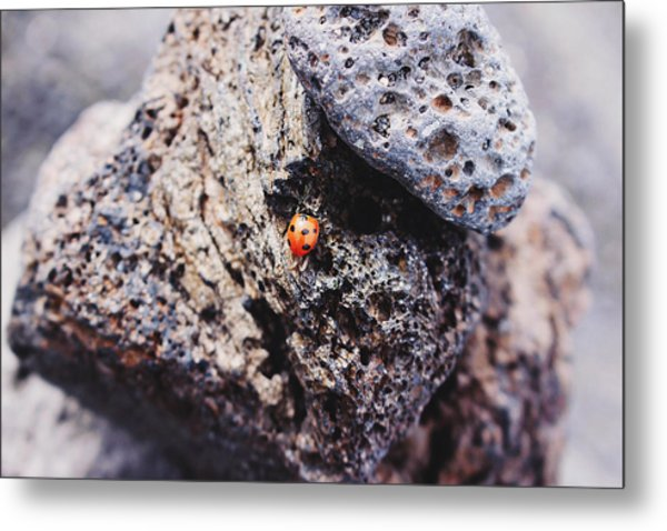 Metal Print featuring the photograph Ladybird 	 by Martina Uras