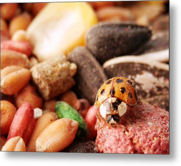 Lucky Ladybug At The Park Metal Print