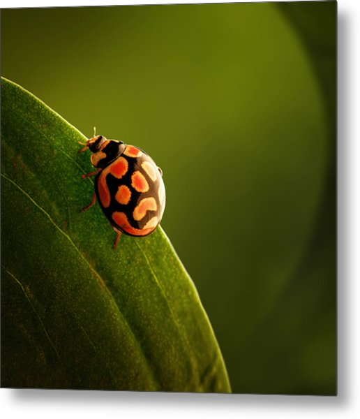 Ladybug  On Green Leaf Metal Print