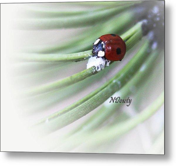 Ladybug On Pine Metal Print