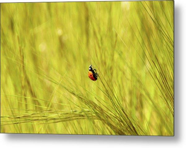 Ladybug In A Wheat Field Metal Print