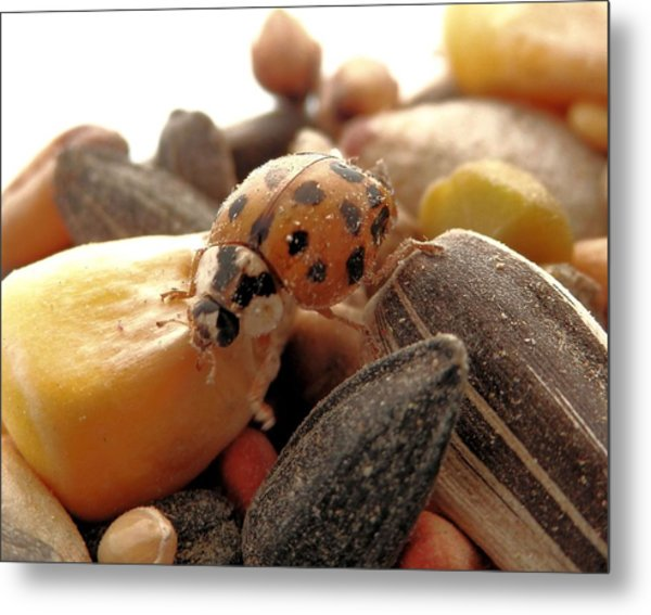 Ladybug On The Run Metal Print