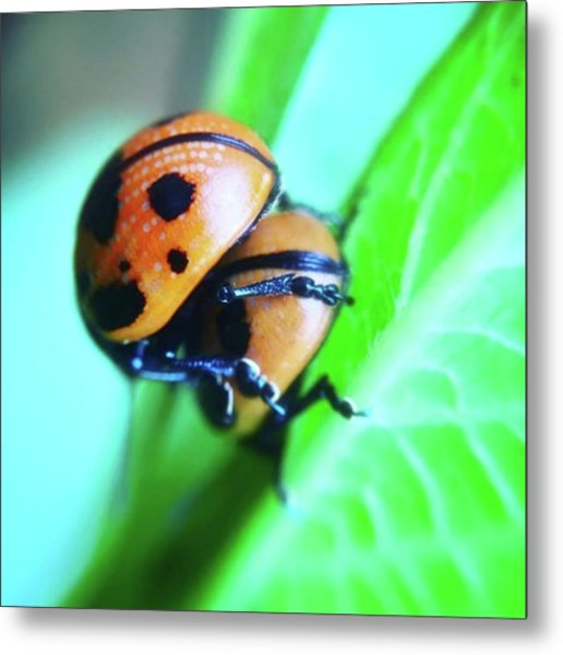 Ladybugs, Behaving In A Most Metal Print
