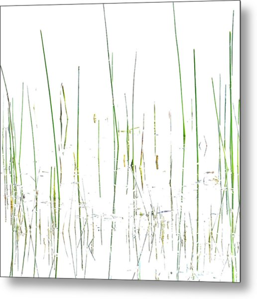 Lake Grass Metal Print