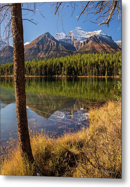 Lake Herbert Reflections Metal Print