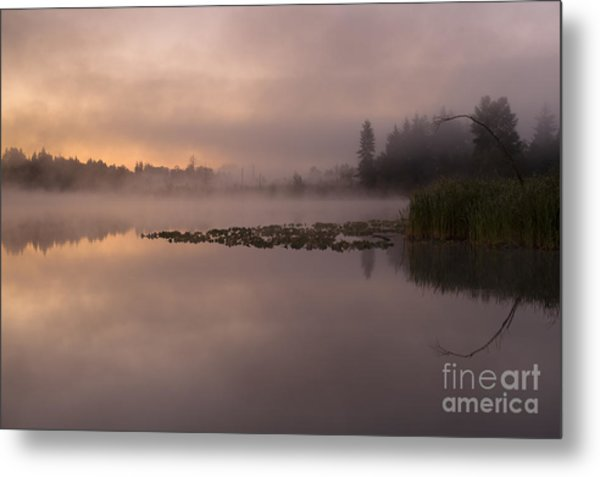Lake Marsh Metal Print