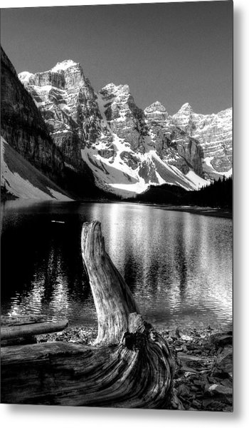 Lake Moraine Drift Wood Metal Print