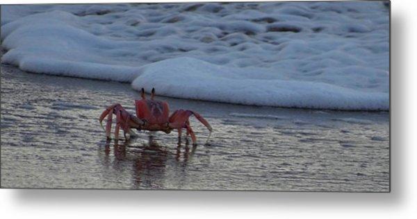 Lamu Island - Crabs Playing At Sunset 3.1 Metal Print