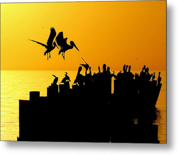 Landing In The Sunset Metal Print