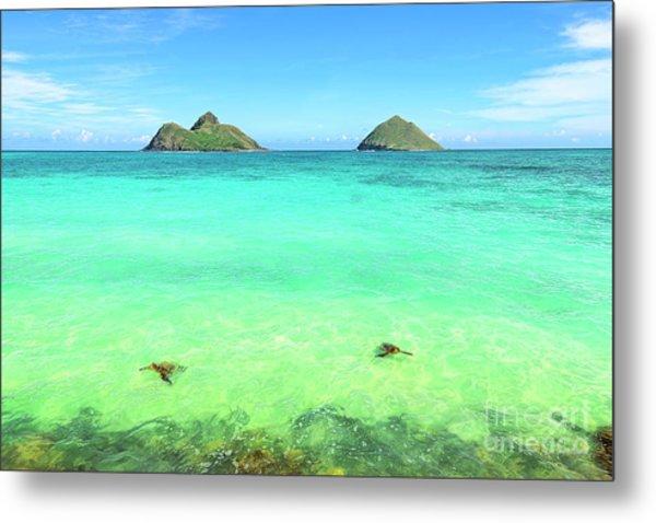 Lanikai Beach Two Sea Turtles And Two Mokes Metal Print