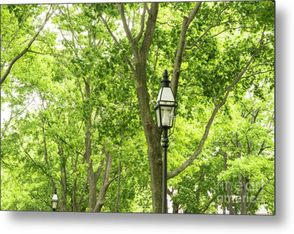 Lanterns Among The Trees Metal Print