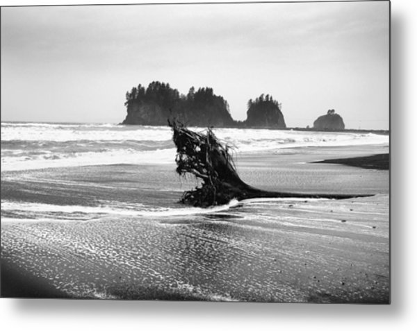 Lapush Washington Metal Print by Todd Fox
