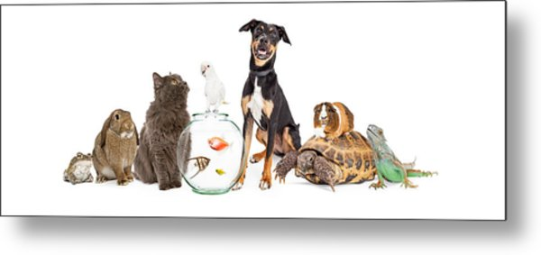 Large Group Of Pet Animals Together Metal Print