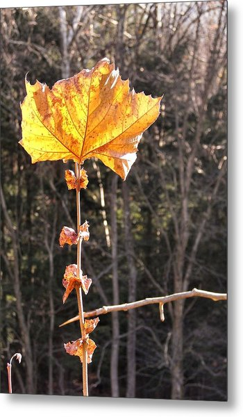 Last Leaf Metal Print by JAMART Photography