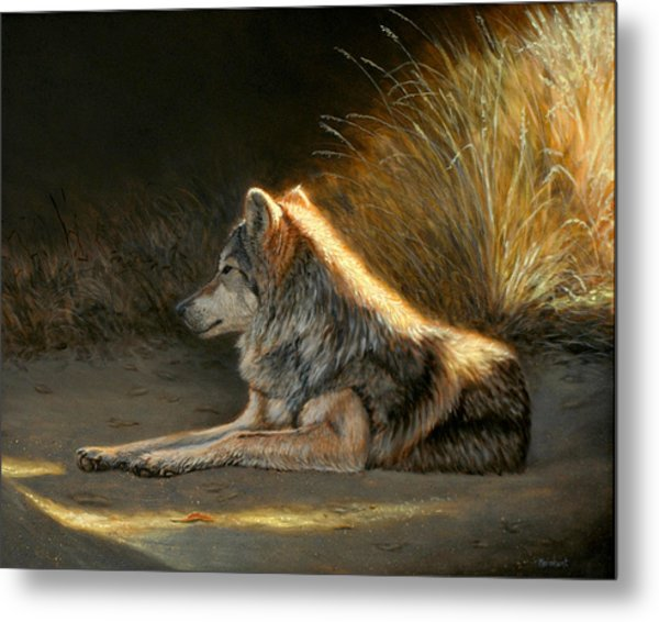 Last Light - Wolf Metal Print