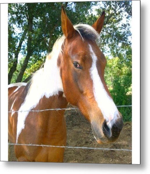 Last Week, I Met My First #horse! She Metal Print