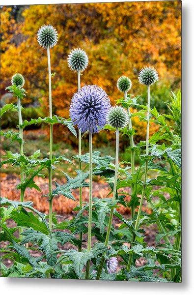 Late Bloom Among Fall Colors Metal Print