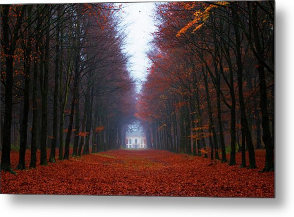 Late Fall Forest Metal Print