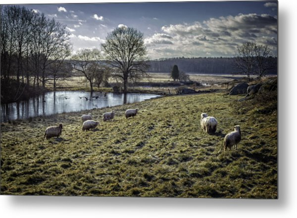 Late Fall Pastoral Metal Print